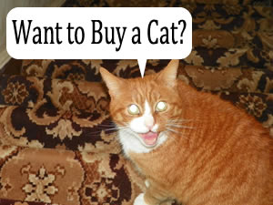 Want to Buy a Cat?